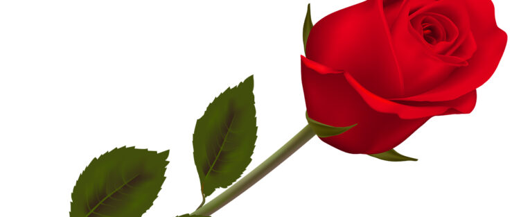 Sertoma Valentine's Day Rose Sale