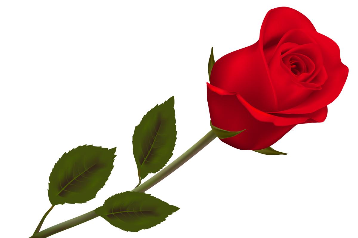 Sertoma Valentine's Day Rose Sale
